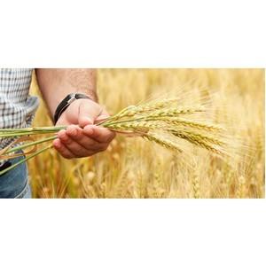 ОНФ исследует, как фермеры оценивают меры государственной поддержки