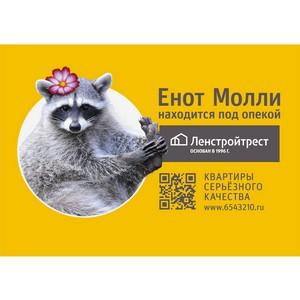«Ленстройтрест» взял под опеку енота в Ленинградском зоопарке