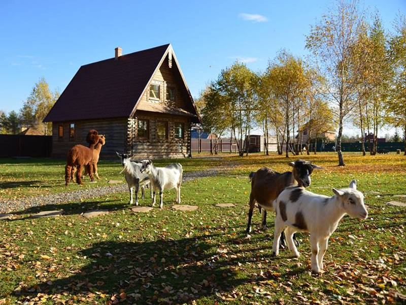 Мини-ферма в Пронино