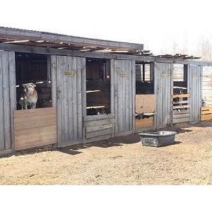 ОНФ в Югре сомневается в эффективности мероприятий по сокращению безнадзорных животных