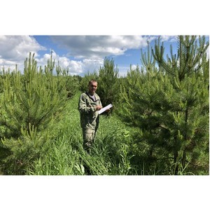 В Новосибирске подвели итоги по мониторингу воспроизводства лесов