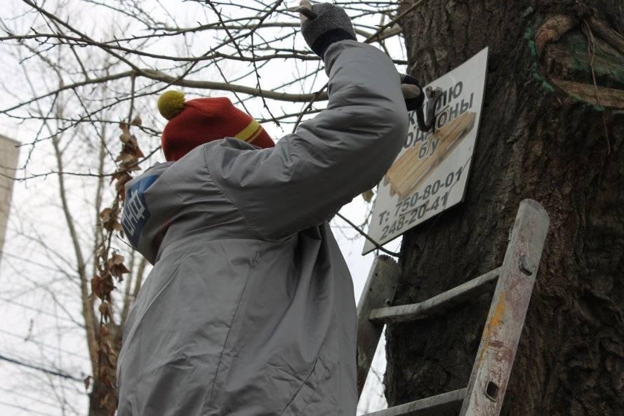 Челябинские активисты Народного фронта очистили деревья от рекламы