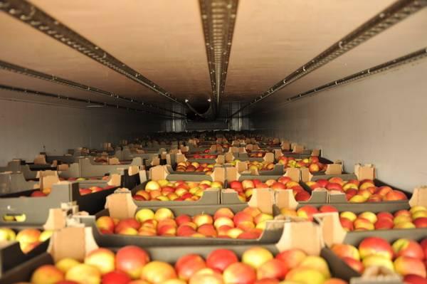Порядка 400 тонн овощей и фруктов из перечня продуктового эмбарго задержали Смоленские таможенники