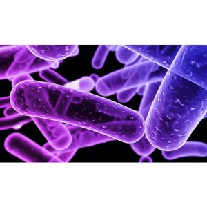 Туберкулез — заразная болезнь, общая для человека и животных