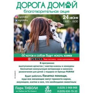 В парке Тиволи пройдет летняя благотворительная выставка