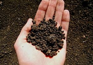 Высокое содержание цинка в почве