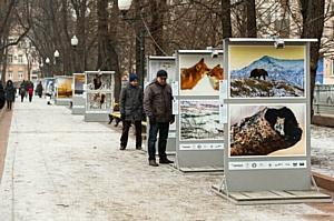 На Патриарших прудах открылась выставка фотографий «Лесные истории. Авторский взгляд»