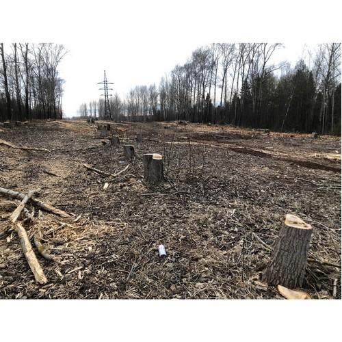 Активисты ОНФ проверяют законность вырубки деревьев в Кирове