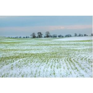 Эксперты рассказали о состоянии озимых посевов