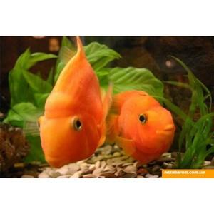 О ввозе аквариумных рыбок из Таиланда