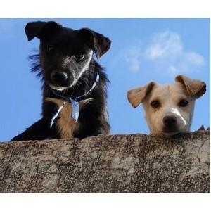 Странные факты о собачьих инстинктах