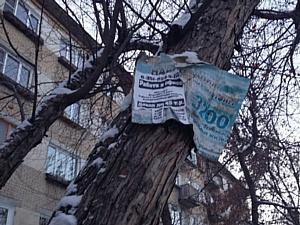 Челябинские активисты ОНФ обратили внимание властей на незаконную рекламу на деревьях