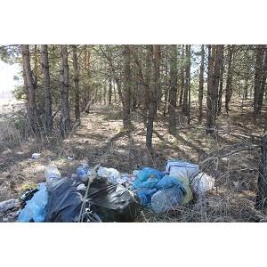 Оренбургские активисты ОНФ проинспектировали несанкционированные свалки в лесополосе Соль-Илецка