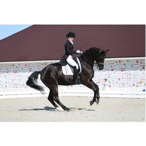 Генная терапия привела к полному восстановлению травмированных лошадей