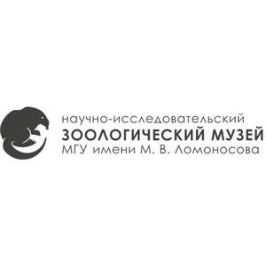 Исторический цикл передач «Слои времени» от Зоологического музея МГУ