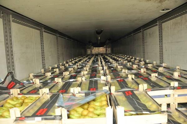 Смоленские таможенники задержали 80 тонн польских фруктов и овощей