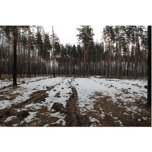 ОНФ просит власти разобраться с вырубкой леса в микрорайоне Боровое