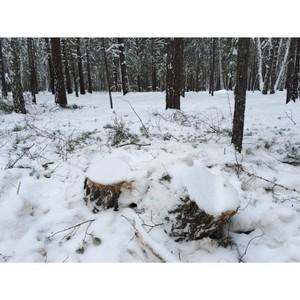 Активисты ОНФ взяли на контроль вырубку леса вблизи Кургана