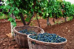 Винодельческий регион «Долина Дона» на выставке Russian Wine Fair 2012