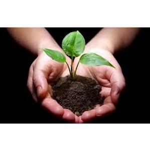 Допущено самовольное снятие и перемещение плодородного слоя почвы