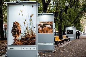 Начала работу четвертая фотовыставка из цикла «Лесные истории»