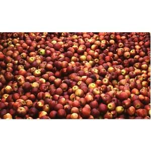 В Омской области задержано 36 тонн яблок