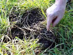 Бенз(а)пирен в почве превышен в 20 раз