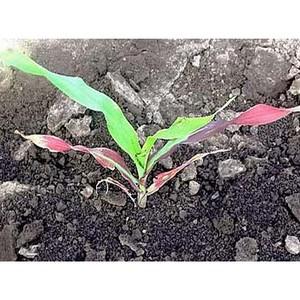 Значение уровня содержания фосфора в почве для растений