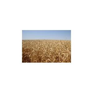 Аграрии холдинга «Солнечные продукты» завершили уборку зерновых культур